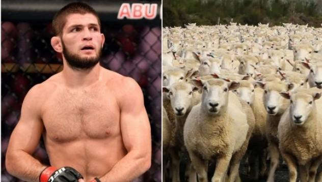 Хабиб: Приключих с ММА, отдавам се на овце и крави