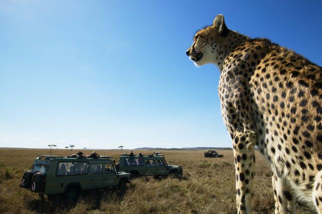 Серенгети Serengeti